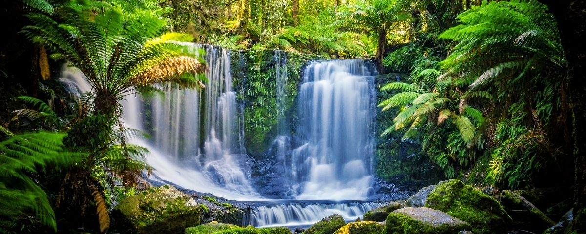 The power of nature for our mental health
